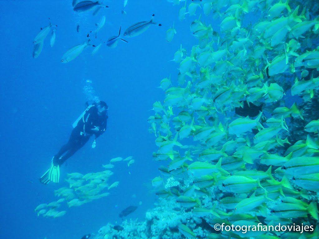 Buceo en la gran barrera de coral en Australia