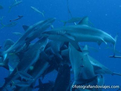 Tiburones Australia