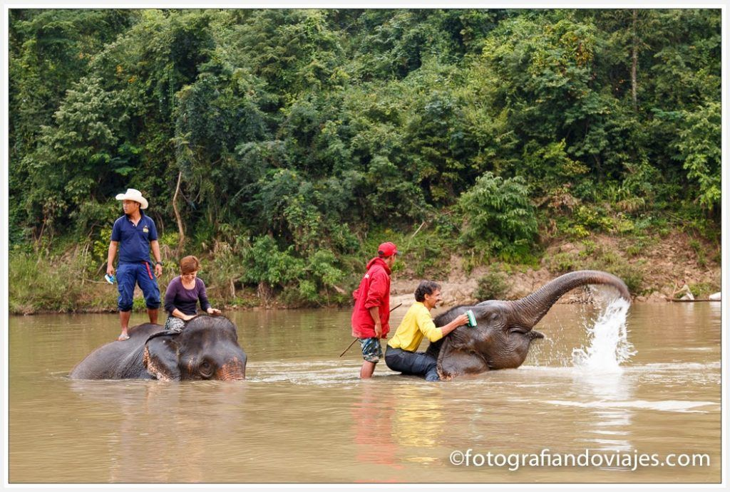 baño elefantes