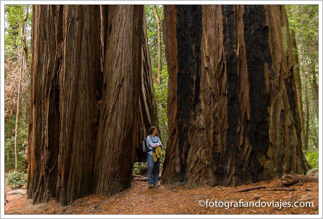 parque nacional Redwood Estados Unidos