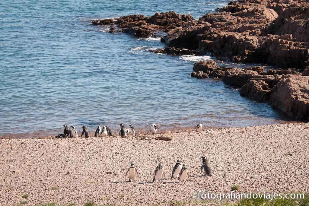 fauna en la orilla