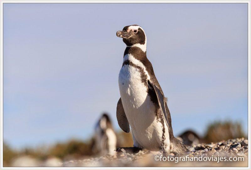 Fauna Patagonia