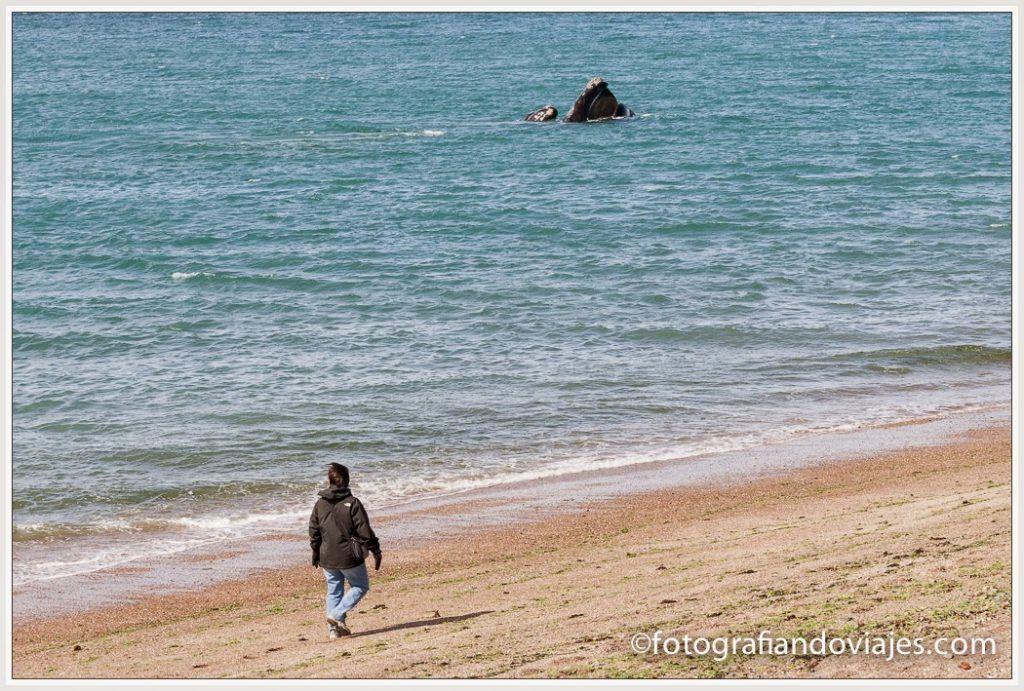 Ballena austral cerca de la playa en Península Valdes (Argentina)