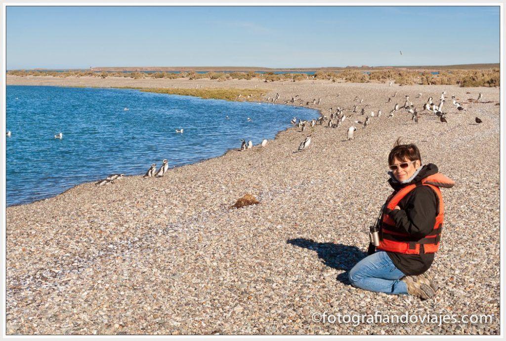 Pingüinos de Magallanes Puerto Deseado, fauna marina Patagonia Argentina