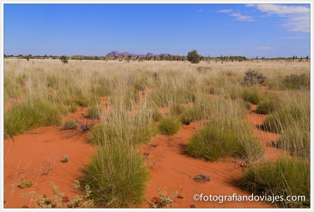 outback australiano con las Olgas al fondo