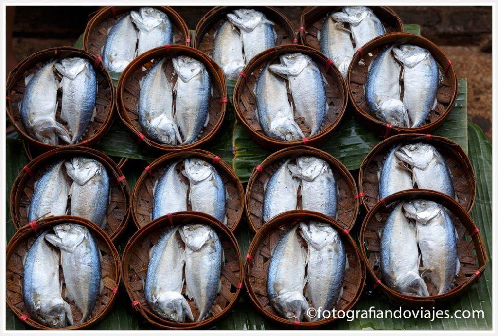 peces tailandia