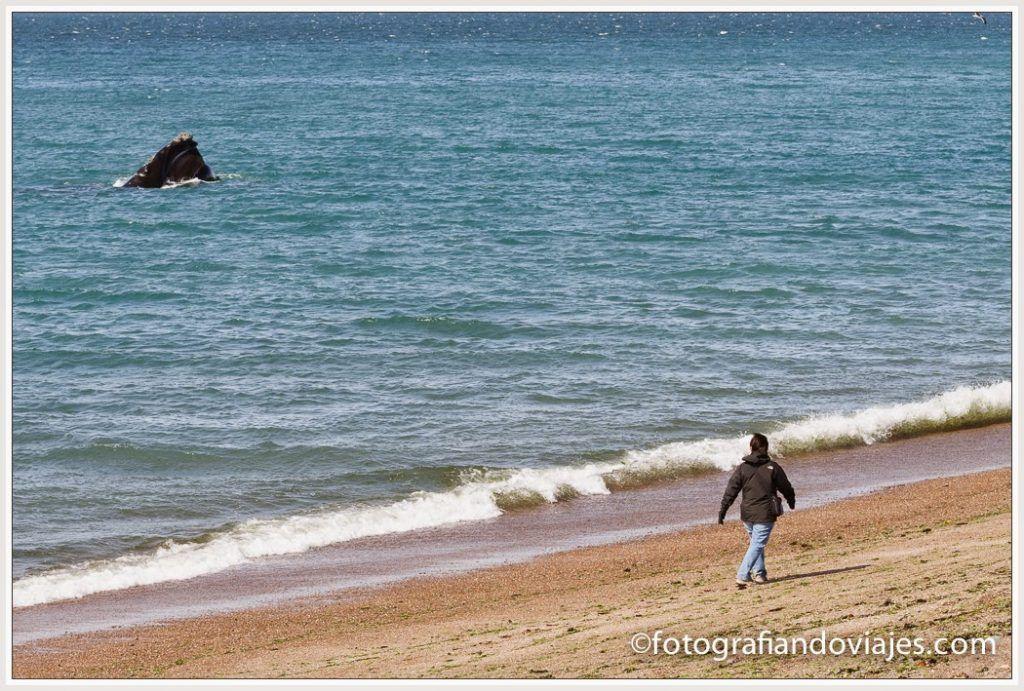 ballena austral en Playa el Doradillo, Argentina