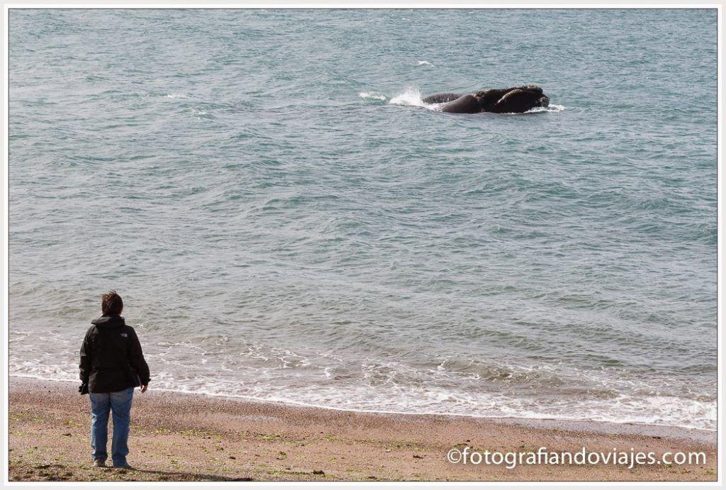donde ver ballenas en patagonia argentina