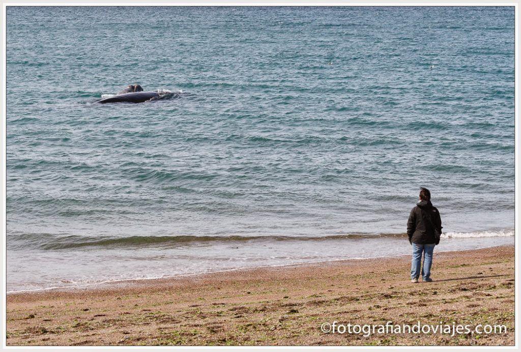 ballenas en playa el doradillo argenitina