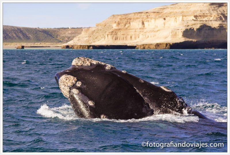Ballenas patagonia Península Valdes