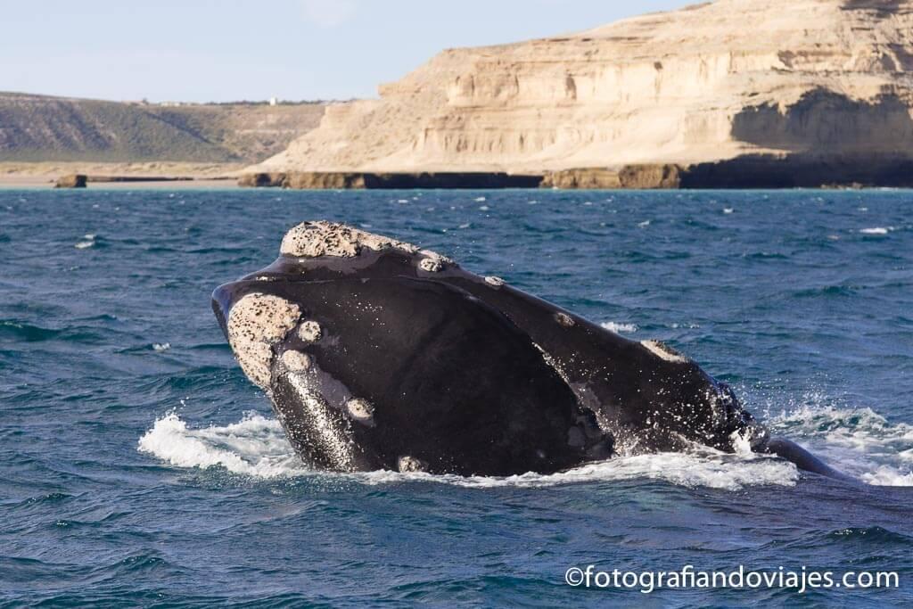 ballenas Peninsula Valdes Argentina