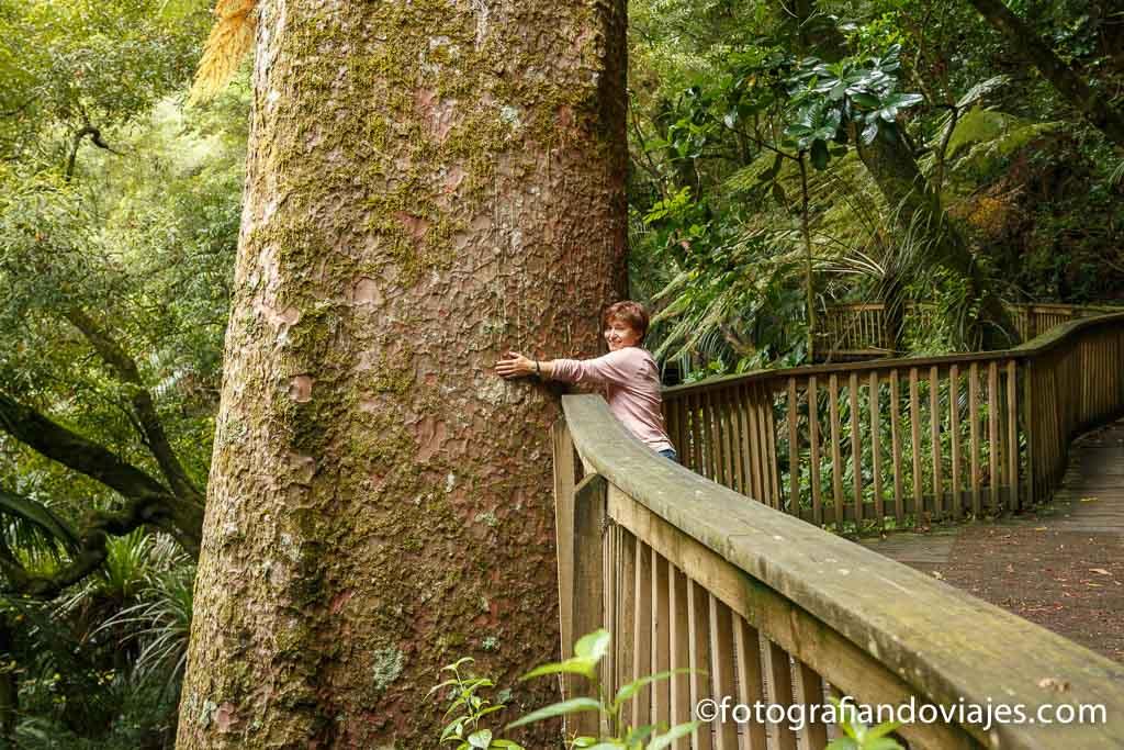 Whangarei Nueva Zelanda Kauris