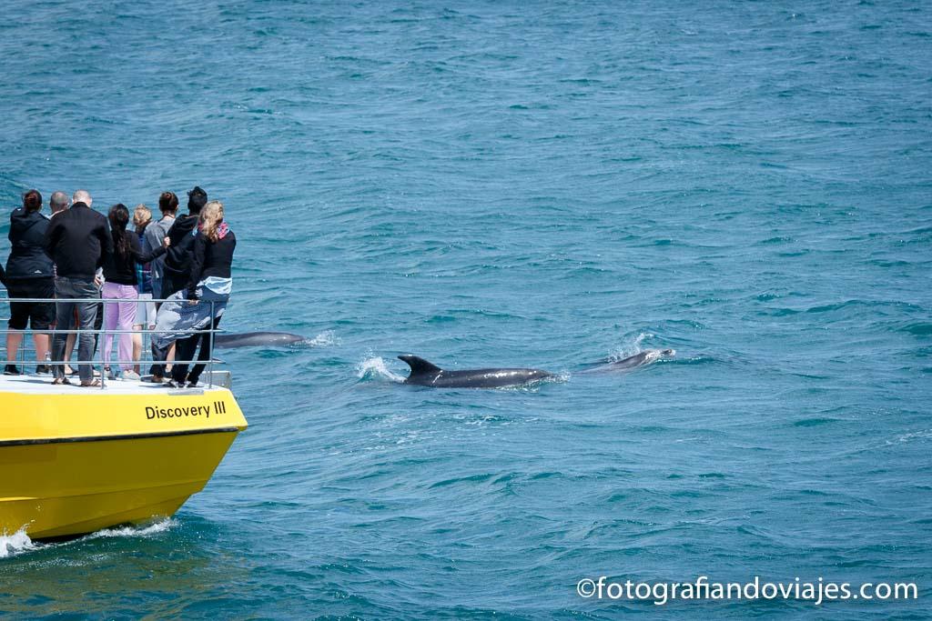 delfines en nueva zelanda