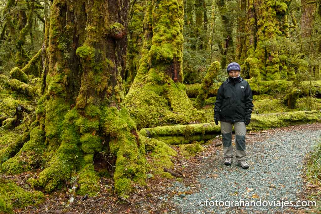 Milford Sound trekking Nueva Zelanda