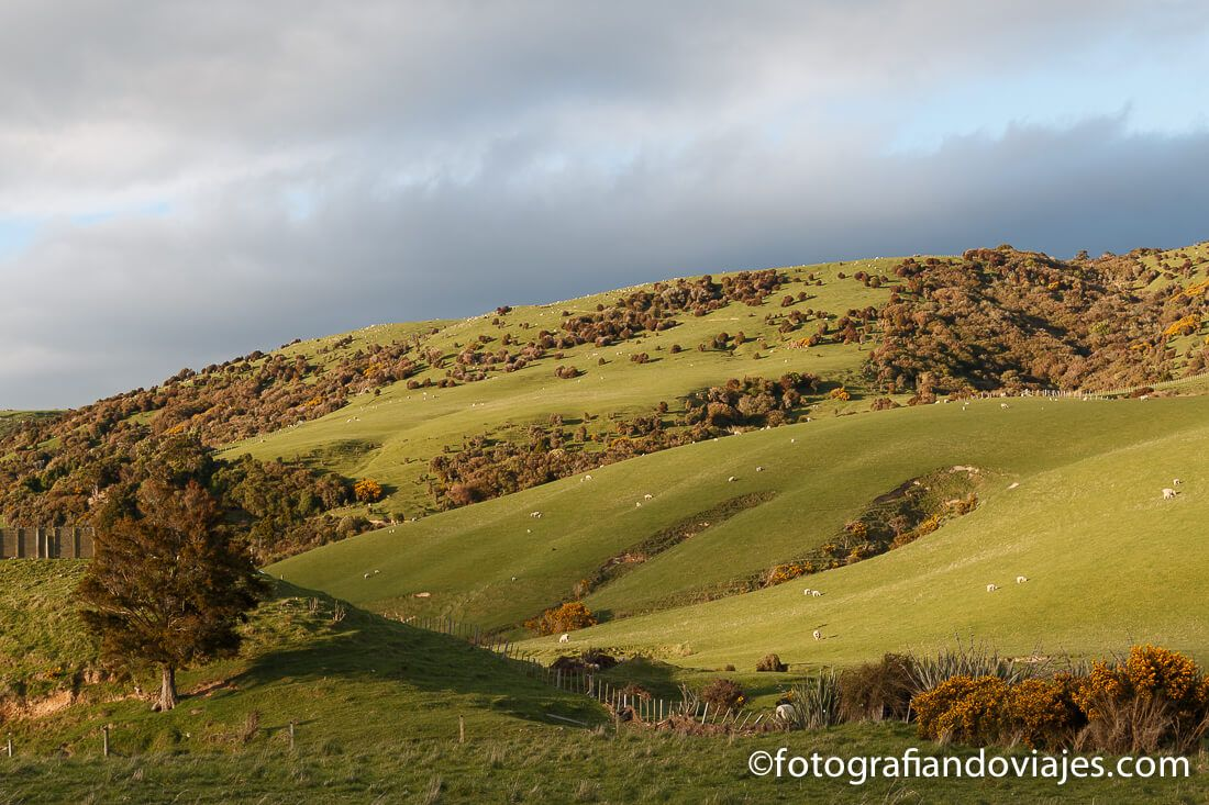 Southern scenic route Nueva Zelanda