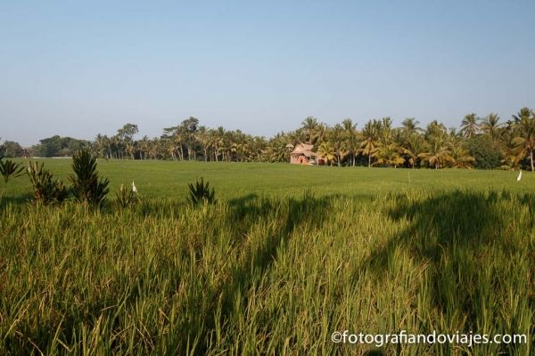 Arrozales de Ubud Bali Indonesia