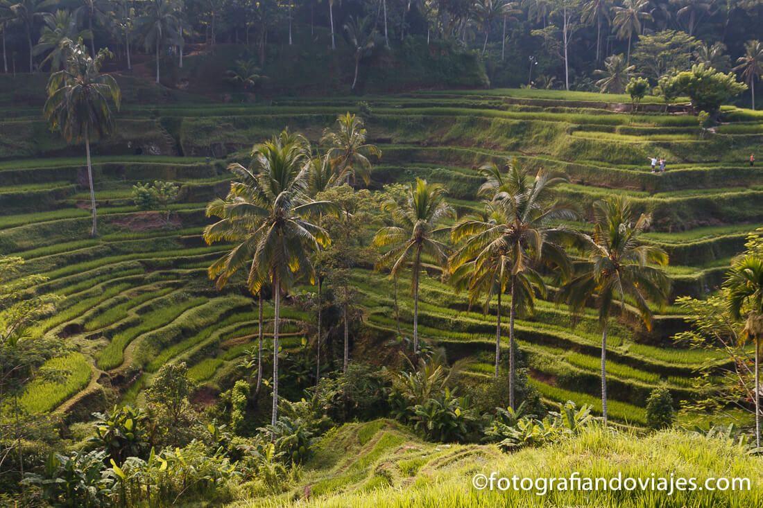 Arrozales de Tegalalang Bali Indonesia