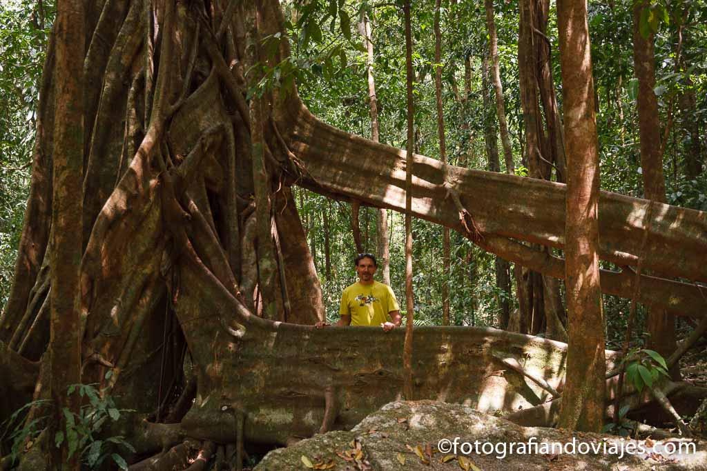 garganta Mossman Australia