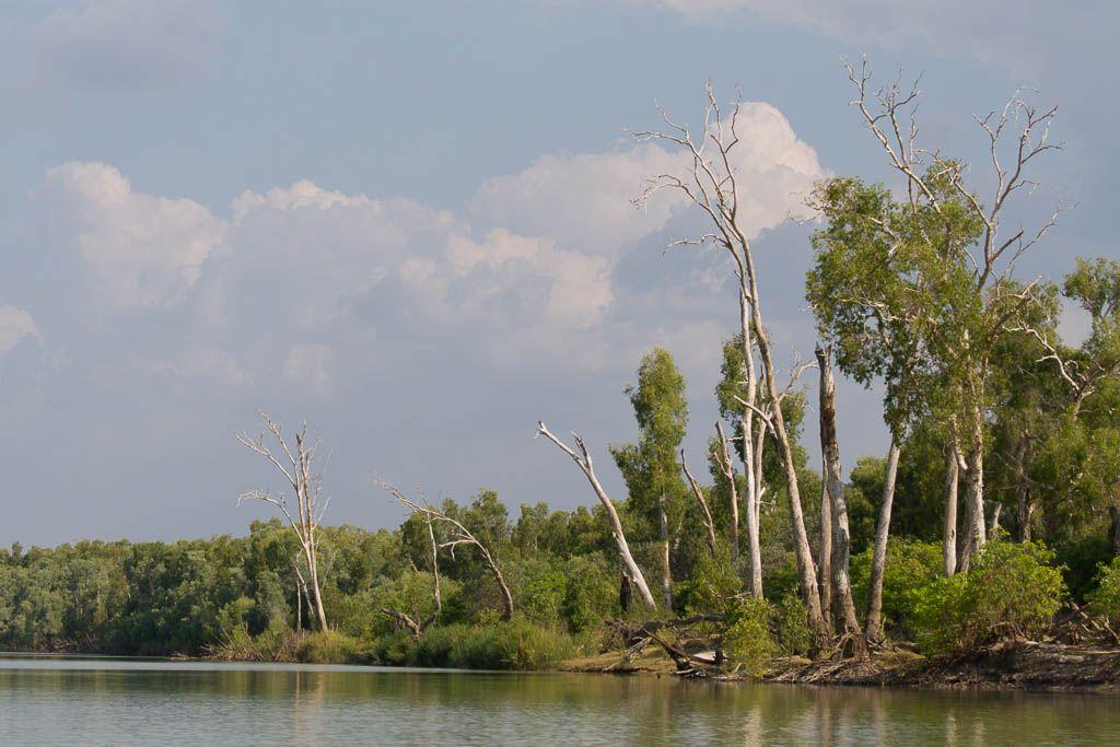 Kakadu Australia