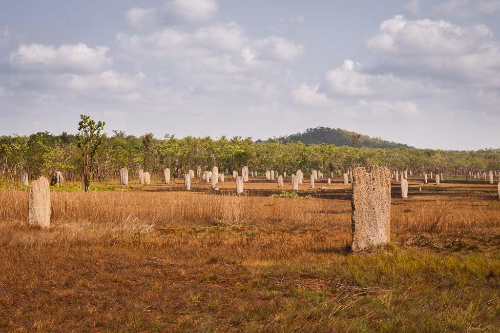 Termiteros Litchfield Australia