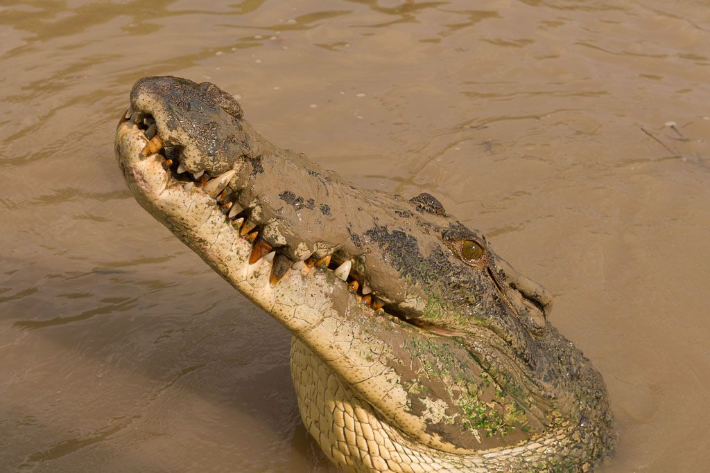 cocodrilos Litchfield Australia