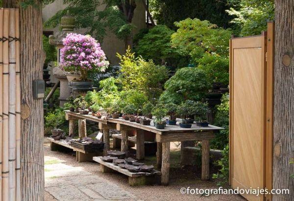Omiya la ciudad de los bonsai