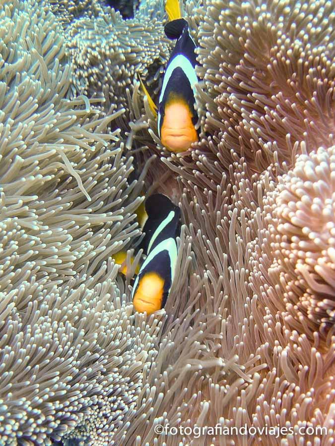 Buceo Tailandia Similan