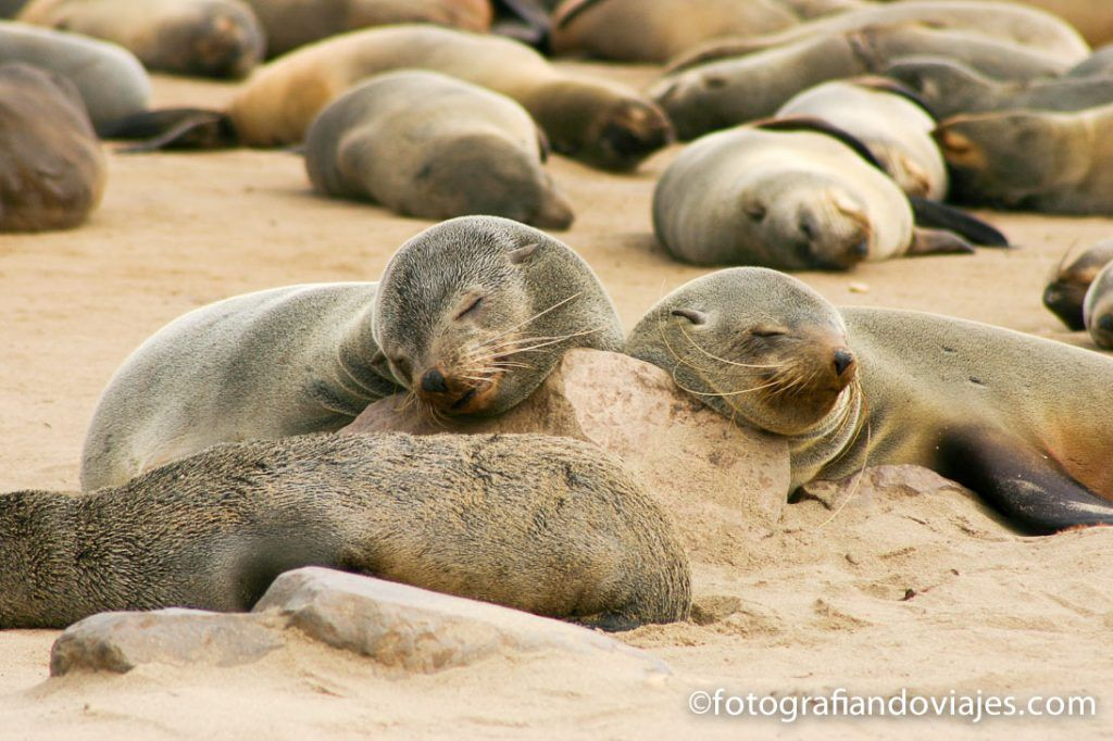 ver focas en Namibia