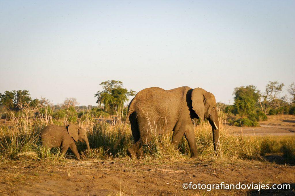 Parque Chobe Botswana, para ver elefantes