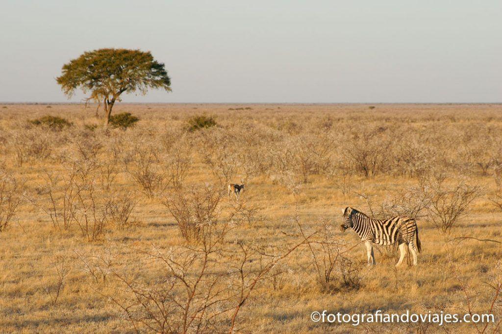 Parque nacional Etosha Namibia