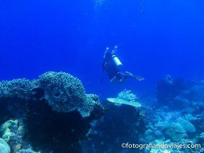 Buceo en Komodo Indonesia