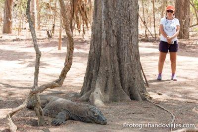 Parque nacional Komodo Flores Indonesia