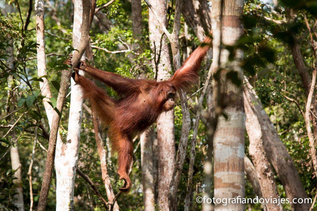 Tanjung Puting en Borneo viaje en klotok