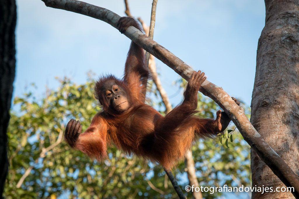 Tanjung Puting Borneo en  viaje en klotok