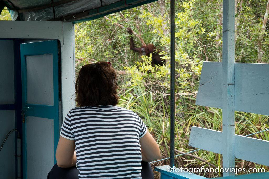 viendo orangutanes desde el klotok