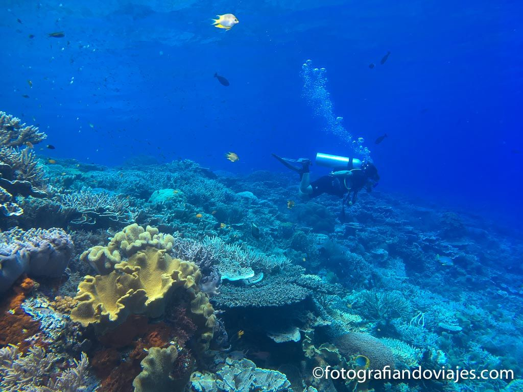 buceo indonesia