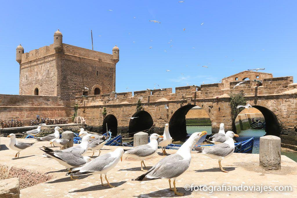 Essaouira skala du port con gaviotas