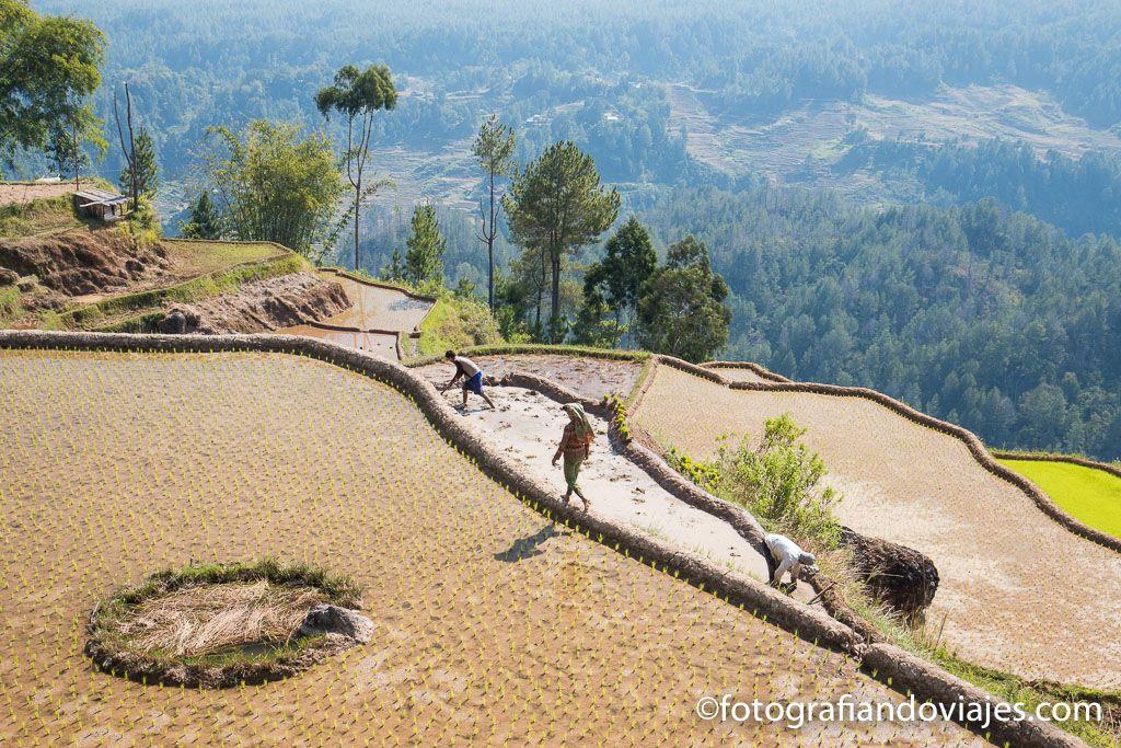 Trekking en Tana Toraja