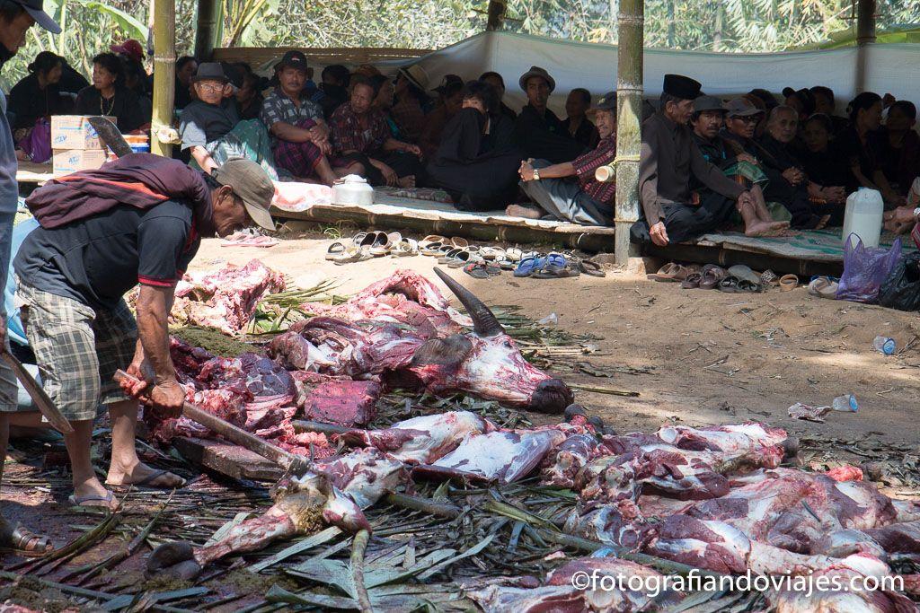 Funeral en tana toraja sulawesi indonesia