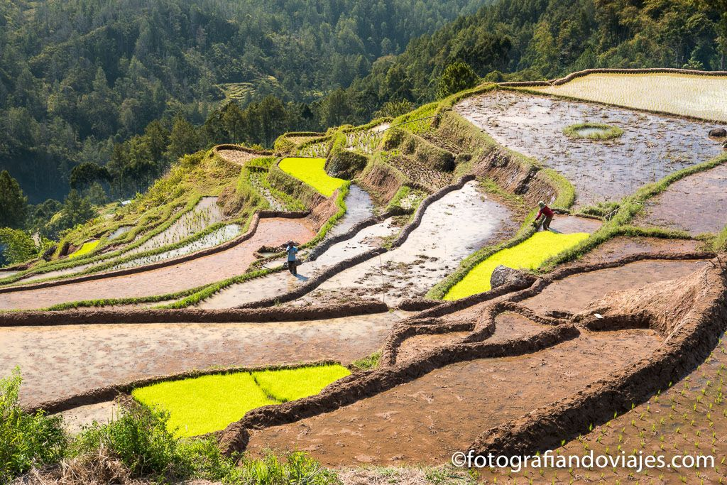 Trekking por Tana Toraja Rantepao