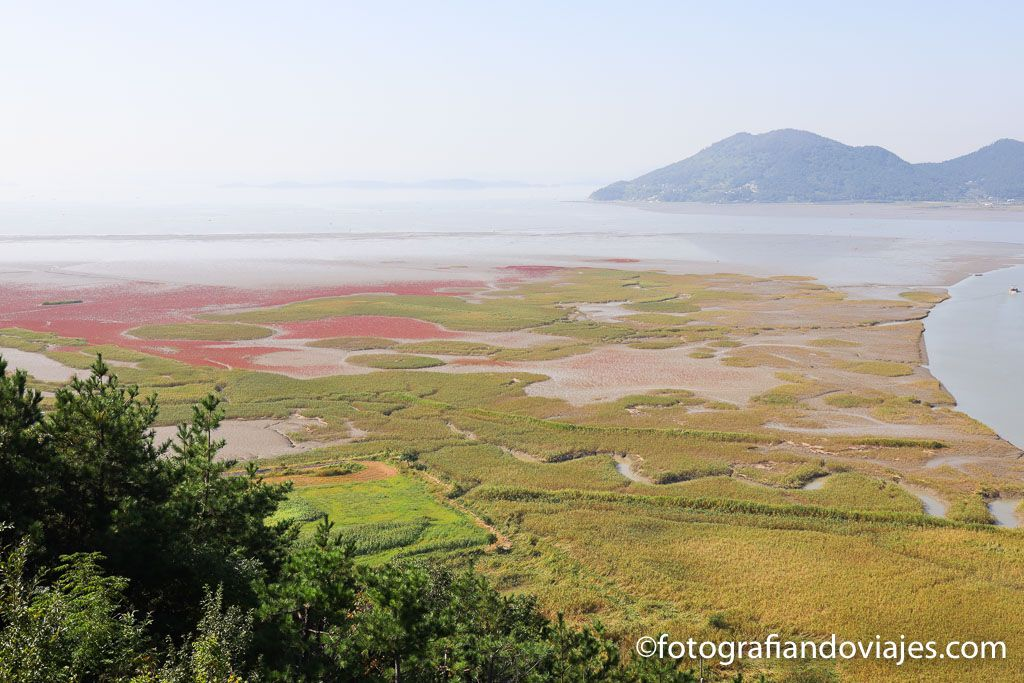 Humedal de Suncheon
