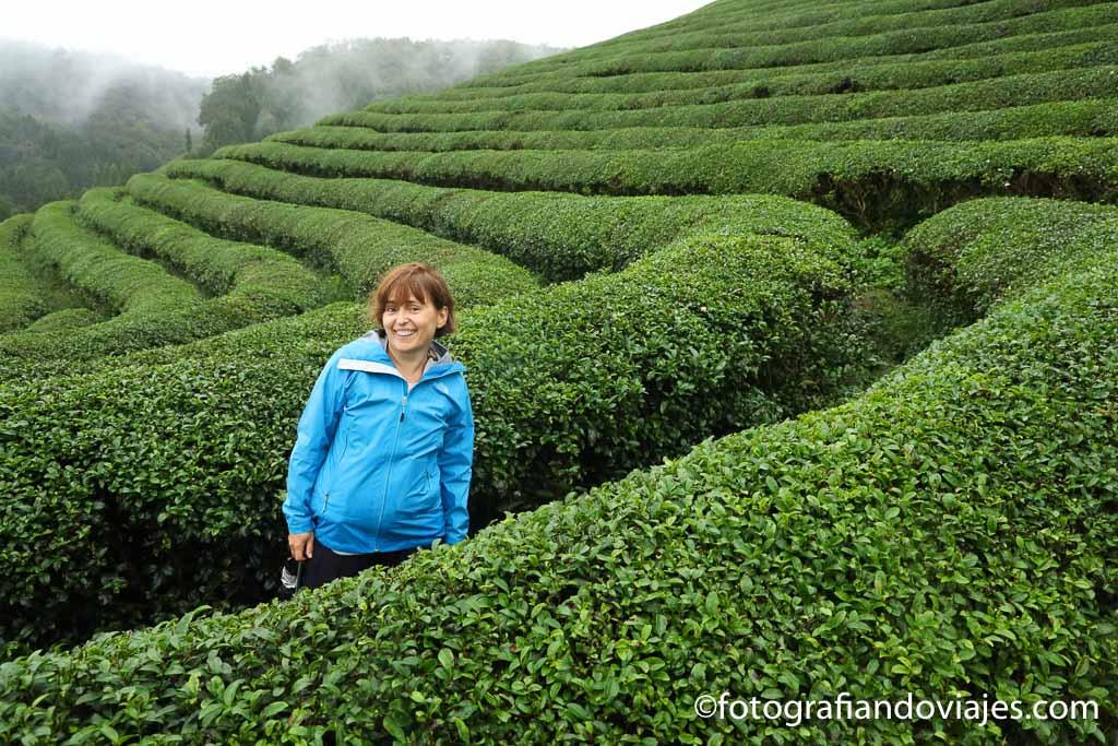 campos de te de boseong Daehan Dawon