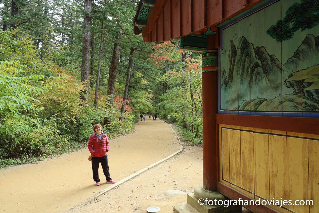 Bosque de cedros del templo Woljeongsa