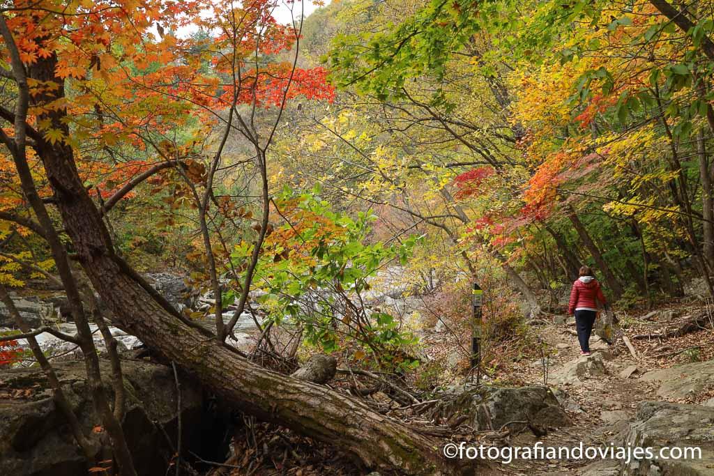 Seonjaegil parque nacional odaesan corea del sur