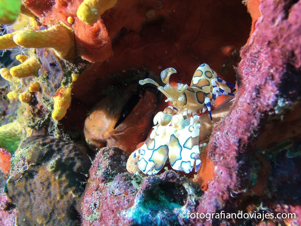 buceo en Richelieu rock tailandia