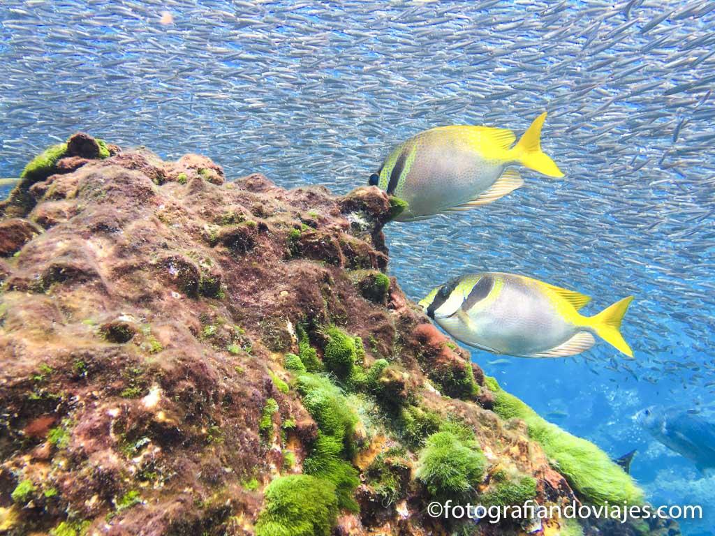 Buceo en mar de Andaman Tailandia