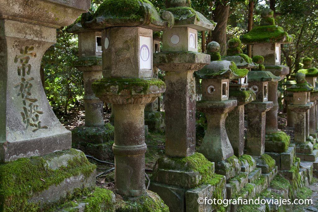 linternas de piedra del santuario Kasuga taisha