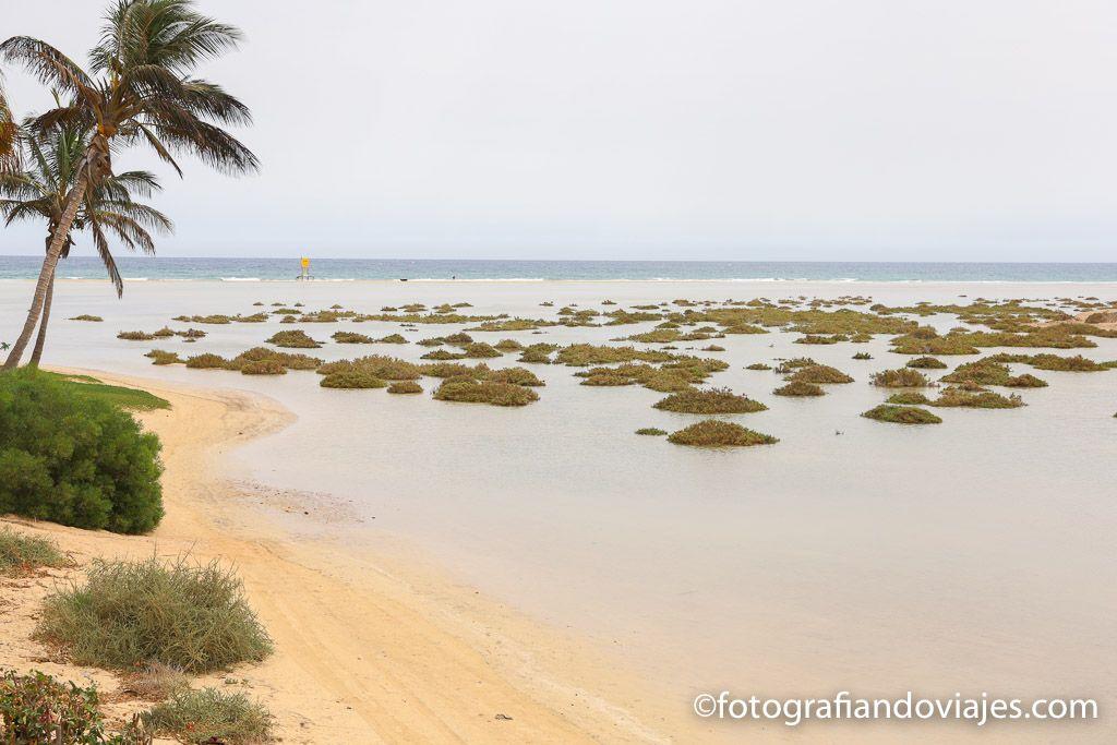 Playas Sotavento laguna Jandia Fuerteventura