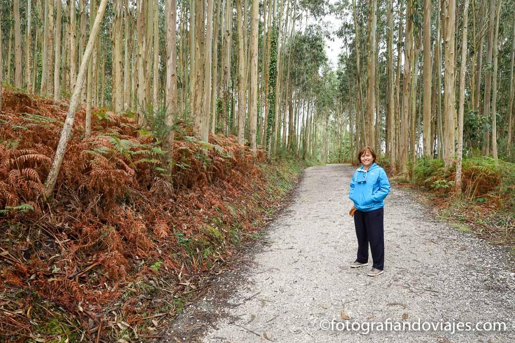 pista de tierra y bosque de eucaliptos