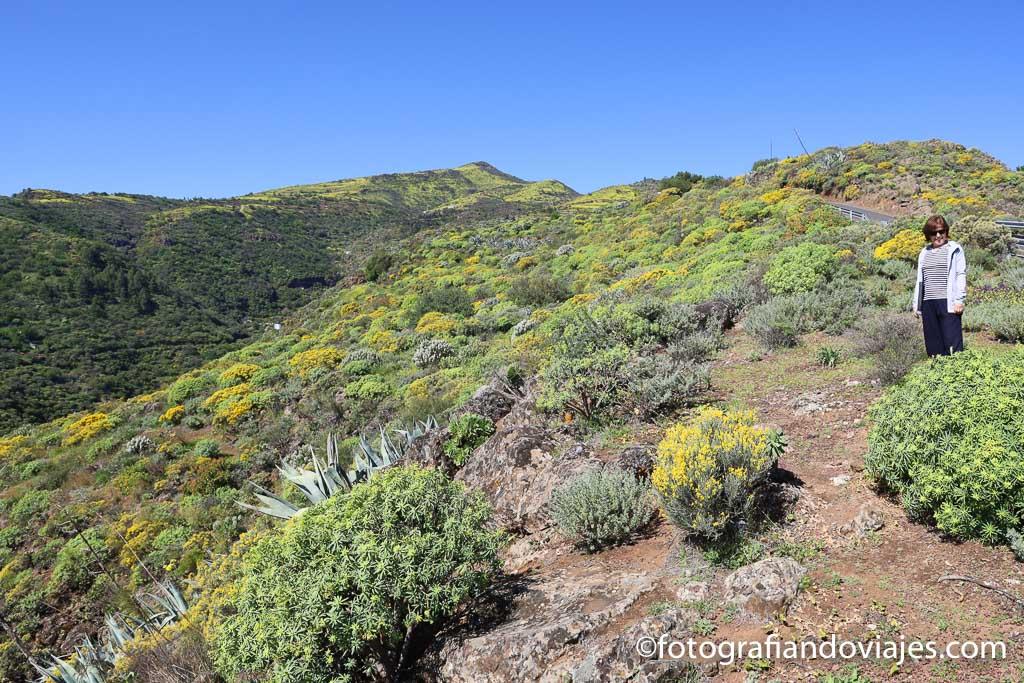 campo primavera en el interior de Gran Canaria